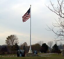 Veteran's Day, USA by BarbL
