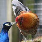 Kissin' Cousins............ by PrairieRose