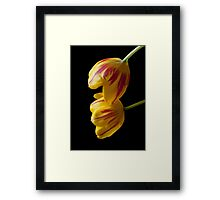 Tulip Treasures Framed Print