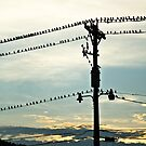 Birds on a Wire by Levi Arnold