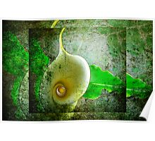 Arum lily. Poster