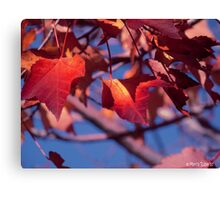Ready to Fall... Canvas Print