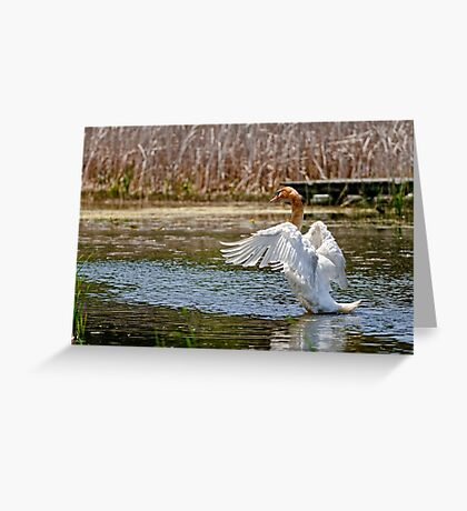 Drying Off Greeting Card