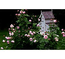 Mayor of Casterbridge Rose and Birdhouse Photographic Print