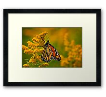 Monarch Butterfly - 23 Framed Print