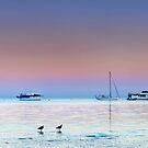 Dunwich Dawn - North Stradbroke Is. Qld Australia by Beth  Wode