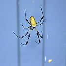 Golden Silk Orb-Weaver by RebeccaBlackman