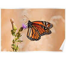 Monarch Butterfly - 29 Poster