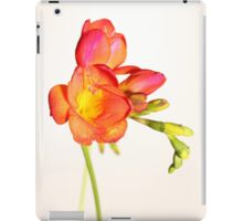 Vibrant Colours iPad Case/Skin