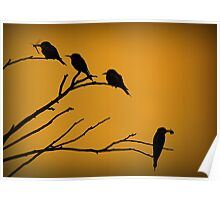 Silhouettes of Bee-eaters Poster