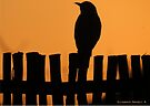 A thrush on the fence by Elizabeth Kendall