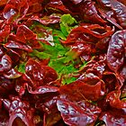 Fresh coral-red lettuce by Cheryl Sterkenburg