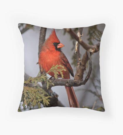 Male Northern Cardinal in Cedar Tree - Ottawa, Ontario Throw Pillow