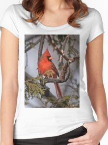 Male Northern Cardinal in Cedar Tree - Ottawa, Ontario Women's Fitted Scoop T-Shirt