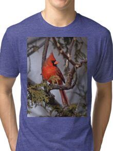 Male Northern Cardinal in Cedar Tree - Ottawa, Ontario Tri-blend T-Shirt