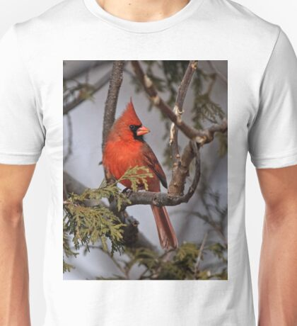 Male Northern Cardinal in Cedar Tree - Ottawa, Ontario T-Shirt