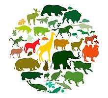 Animals by Emir Simsek