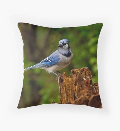 Blue Jay on Stump - Ottawa, Ontario Throw Pillow