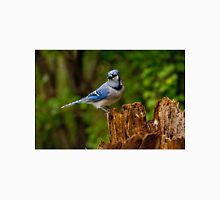 Blue Jay on Stump - Ottawa, Ontario Unisex T-Shirt