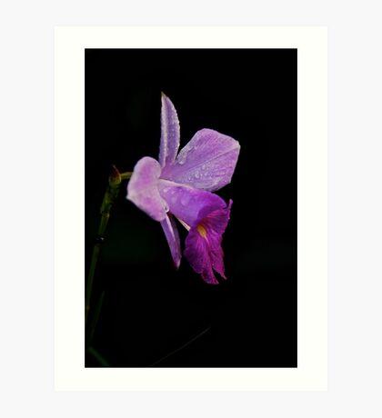 Costa Rica Orchid Art Print