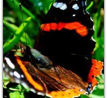 Vibrant Nature by blackrose25