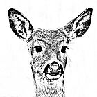 Yearling sketch by Rodney55