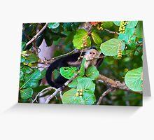 Spider Monkey, Costa Rica Greeting Card