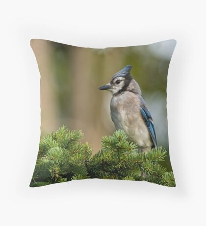 Blue Jay in Spruce Tree - Ottawa, Ontario Throw Pillow