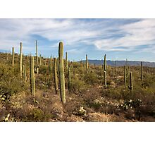 Garden of Cactus Photographic Print