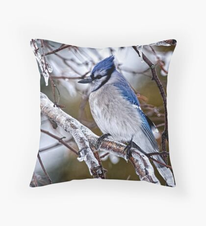 Blue Jay on Ice Covered Branch - Ottawa, Ontario Throw Pillow