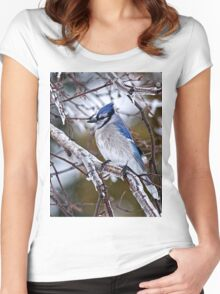 Blue Jay on Ice Covered Branch - Ottawa, Ontario Women's Fitted Scoop T-Shirt