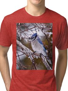 Blue Jay on Ice Covered Branch - Ottawa, Ontario Tri-blend T-Shirt