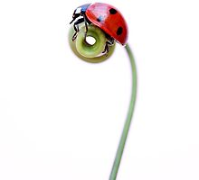 Ladybird 1 by Brian Haslam