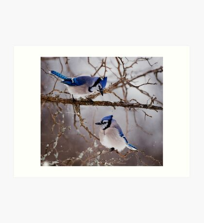 Blue Jays - Shirley's Bay, Ottawa Art Print