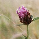 Clover and Wild Grasses by Astrid Ewing Photography