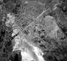 Cascades by Lisa Dotzauer