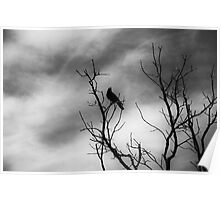 A bird on a leafless tree version 2 Poster