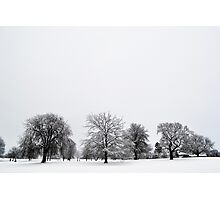 Winter Day Snowy Trees Photographic Print