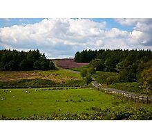 Moors Road Photographic Print