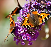 Fly Away Butterfly by Trevor Kersley