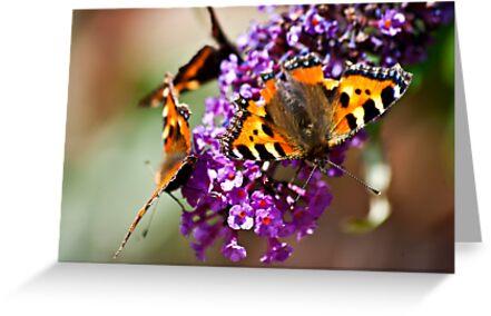 Fly Away Butterfly by Trevor Kersley