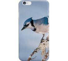 Blue Jay iPhone Case/Skin