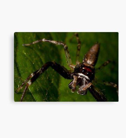 Sad Spider Canvas Print
