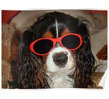 Charlie Girl the COOL DUDE !!! Poster