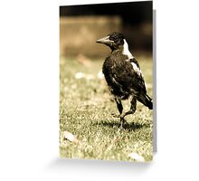 The Scraggly Magpie  Greeting Card