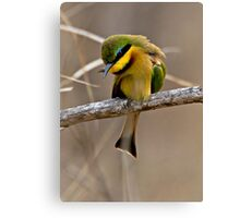 Little Bee Eater Canvas Print