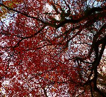 Forever Autumn by Patrick Noble