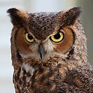 Great Horned Owl by rwilks