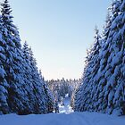 Trail leading through fir forest in winter by intensivelight