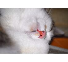 Guess who is sleeping - Nellie Photographic Print
